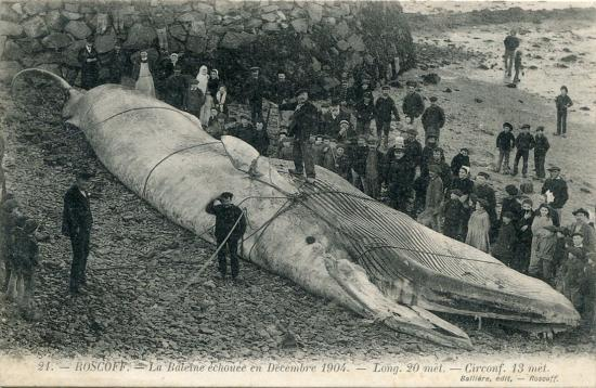 La baleine échouée